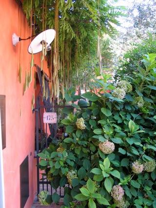 giardino da Guinness: glicine