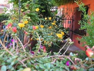 giardino da Guinness: accostamento dei colori
