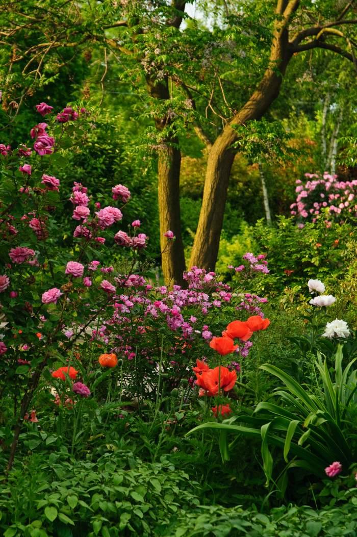 Un giardino da fotografare amici in giardino for Giardino fiori