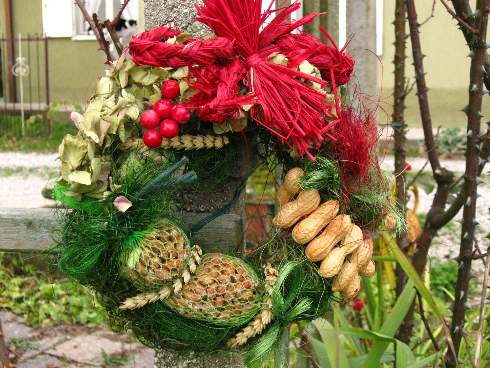 Una strenna per gli amici alati amici in giardino for Pianta noccioline
