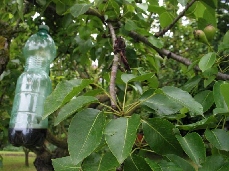 Biotrappola per insetti nocivi amici in giardino - Giardini in bottiglia ...
