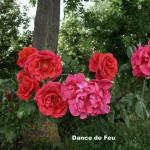 Dance de Feu
