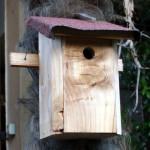 Bird House (nido per uccellini)