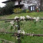 uno steccato con rampicante