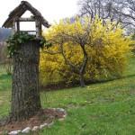 casetta nido per uccellini