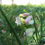 fiori spontanei nel prato accanto alla dolina