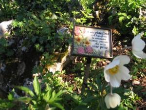 Particolari anche i segna piante
