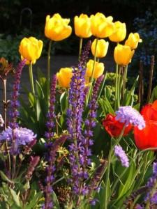 il giardino di Gianfranco