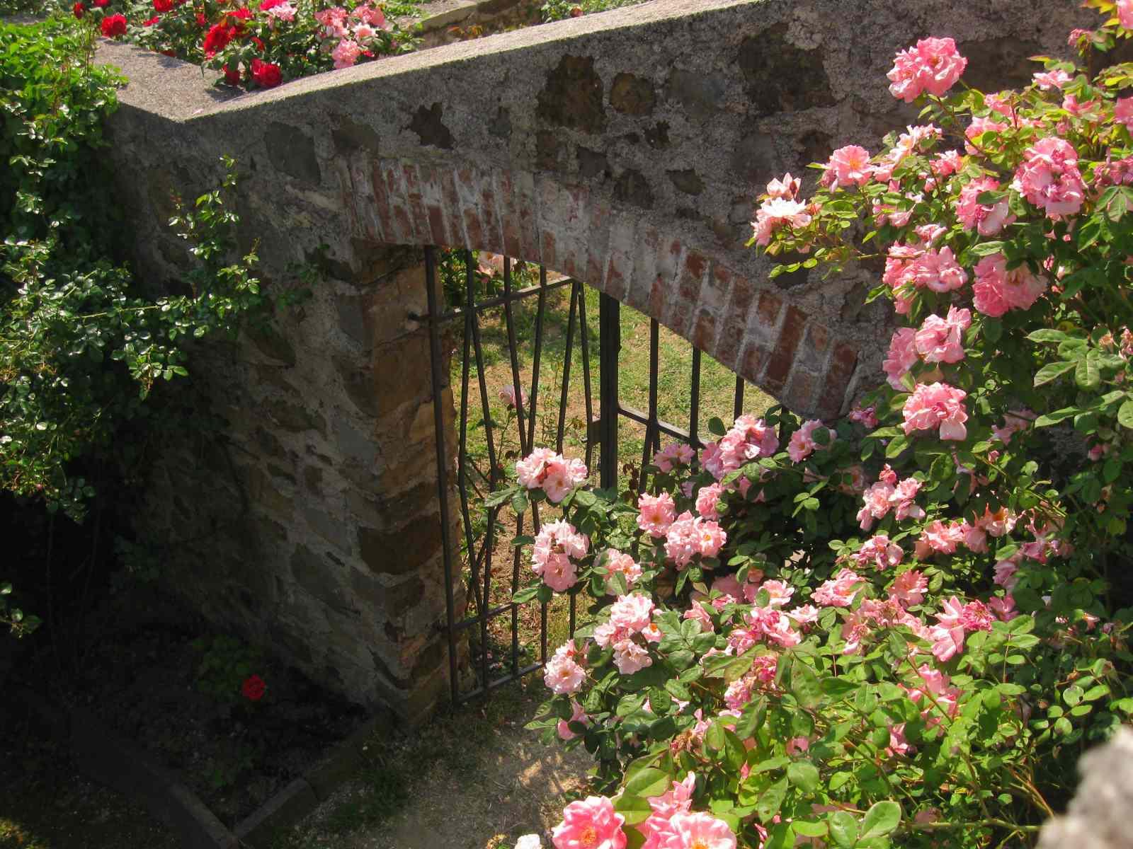 L abbazia di rosazzo ed il suo sentiero delle rose - Giardino con rose ...