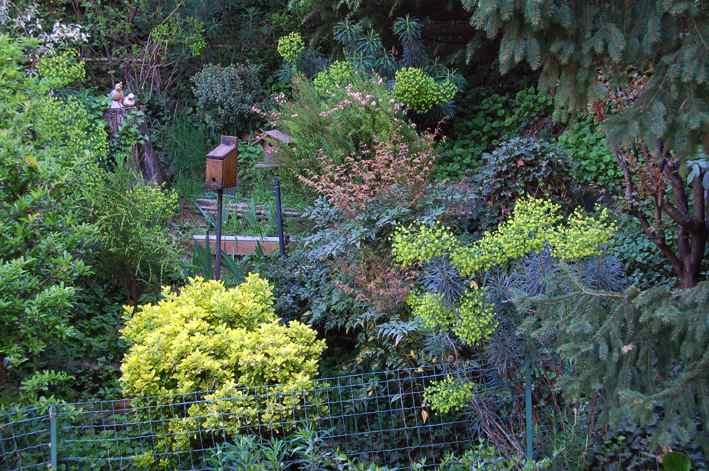 Amici in giardino giardinaggio e dintorni giardinaggio - Piante striscianti per scarpate ...