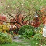 il giardino di Giuliana e Luigi - 1