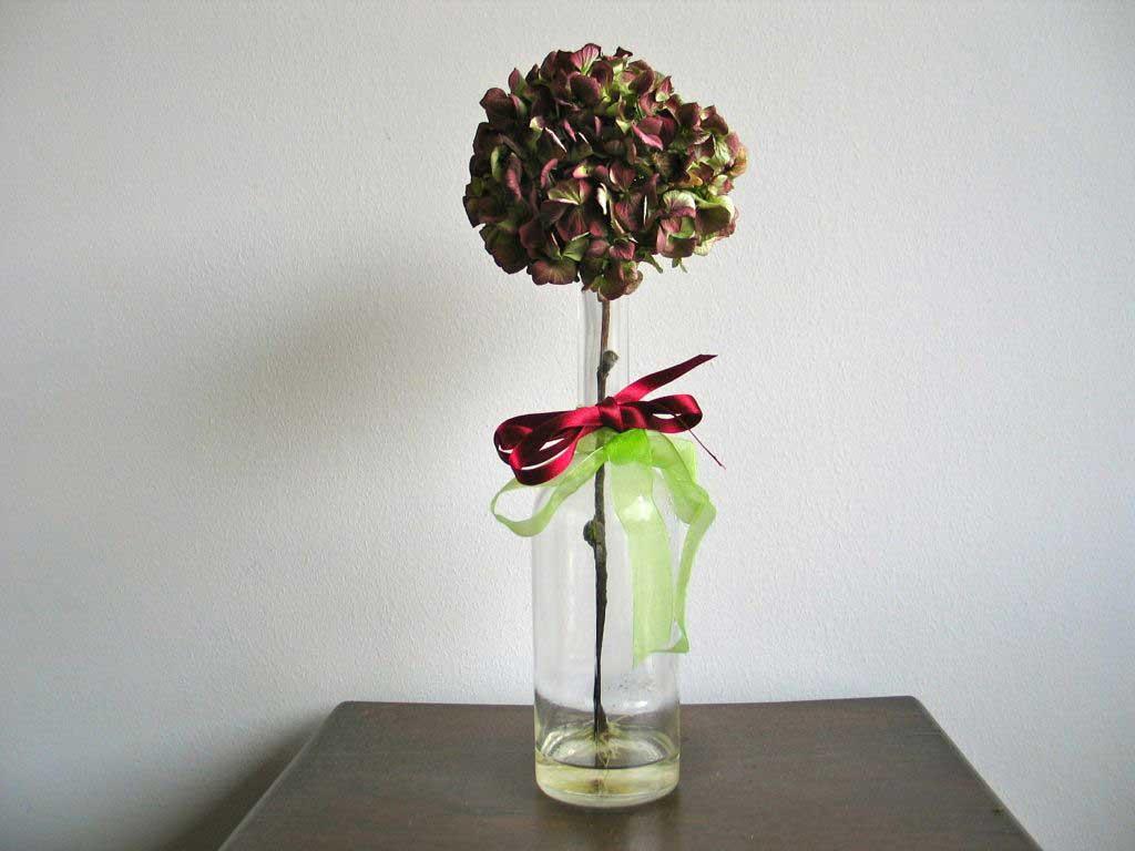 talea di ortensia in vaso