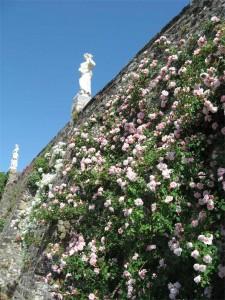 Rose dell'abbazia di Rosazzo