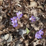 annuncio di primavera