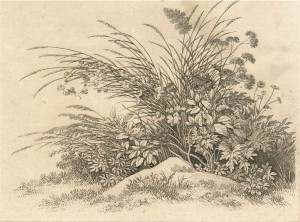 stampe di piante e fiori presso il giardino Foffani