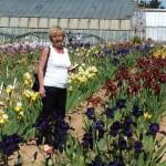 Iris-de-Provence_012