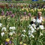 Iris-de-Provence_023