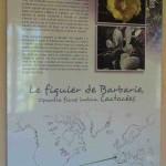 Serre-de-la-Madonne_035