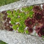 i-giardini-della-Slovenia_1-005