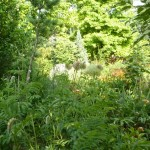 i-giardini-della-Slovenia_1-062