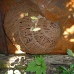 i-giardini-della-Slovenia_1-075