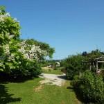i-giardini-della-Slovenia_2-016