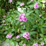 i-giardini-della-Slovenia_2-056