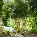 i-giardini-della-Slovenia_3-098