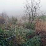 Graminacee-nella-nebbia
