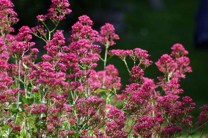 Amici in giardino giardinaggio e dintorni giardinaggio for Giardinaggio e fiori