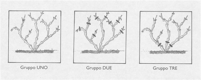 figura_3
