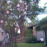 il giardino di Eleonora