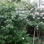 il giardino di Manuela