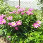 il giardino di Rita