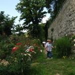 Intervento di potatura verde nel roseto di San Giovanni