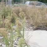 giardino di erbacce