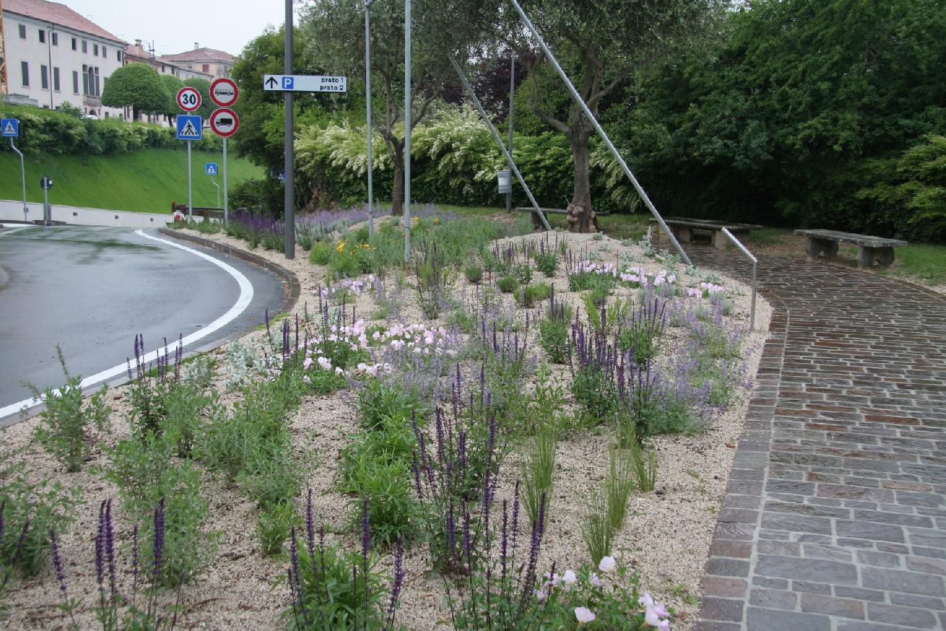 Piante Basse Da Aiuola amici in giardino: giardinaggio e dintorni | giardinaggio