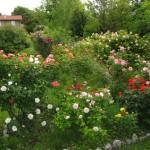 il giardino 'Rosa Mundi'