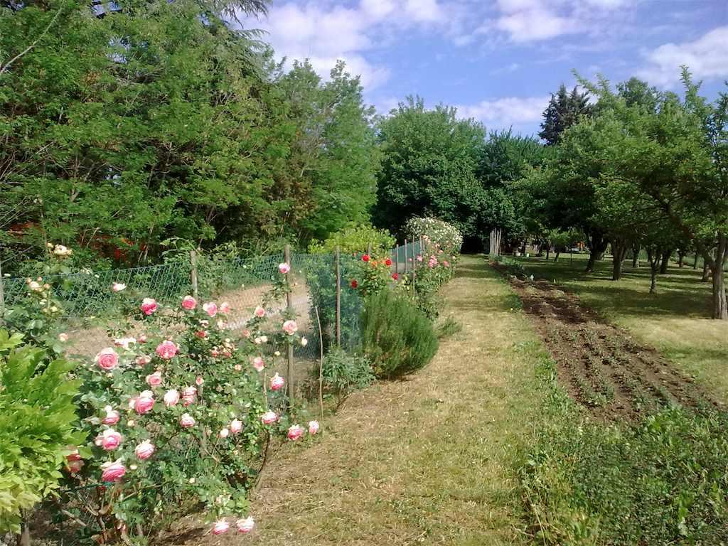 Il curriculum verde di sergio amici in giardino - Il giardino di ausonia ...