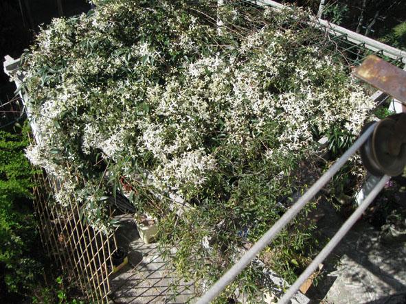 clematis nel panchina rossa n giardino di Riccardo e Silva