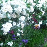 il giardino di Graziella