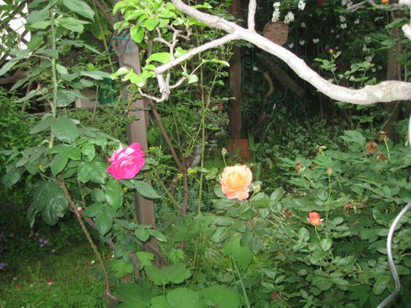 il giardino di Riccardo e Silva