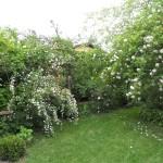 il giardino di Rosella