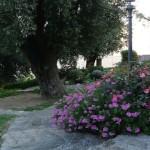 il giardino di Daniele