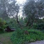 il giardino di Loredana