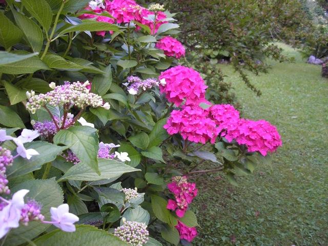 il giardino di loretta