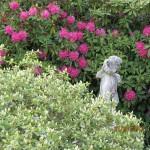 il-giardino-di-roberta_8