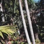 il giardino di puccio