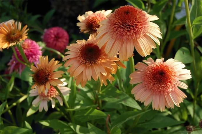 fiori al Susi Garden