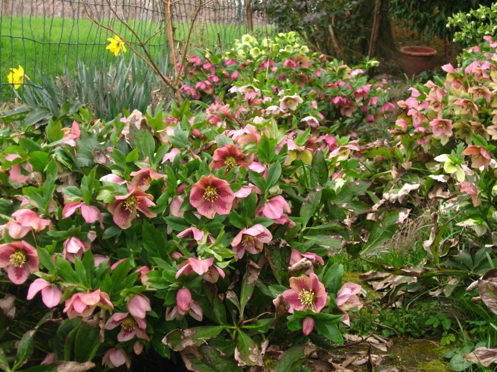 Fiori Tappezzanti Per Aiuole amici in giardino: giardinaggio e dintorni | giardinaggio